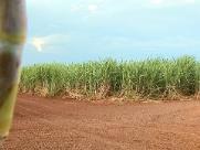 Excesso de açúcar no mercado internacional projeta safra com alta de etanol e preço menor nas bombas